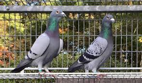 Neuveriteľné čas vtákov bol však rozhodca podozrenie,